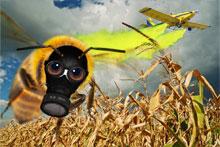 Bienenkampagne