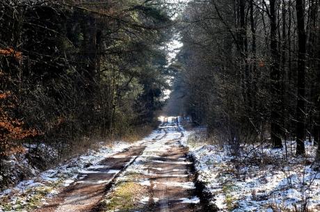 Lingen.Waldweg